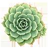 1 растение +350 ₽