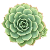 1 растение +300 ₽