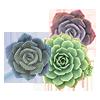 3 растения +650 ₽