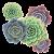5 растений +950 ₽