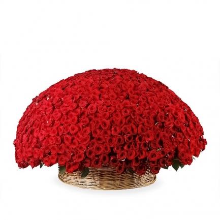 1001 красная роза Эквадор