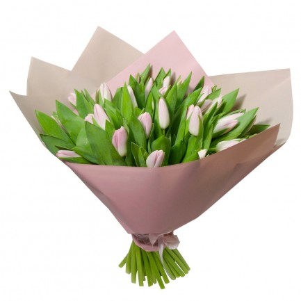 31 розовый тюльпан