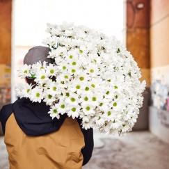 Хризантема (штучно)