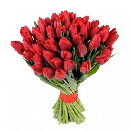 Тюльпаны (штучно)